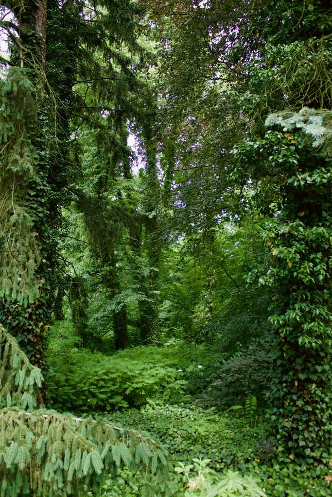 ogród pan natura 7 - Ogród Botaniczny Polskiej Akademii Nauk